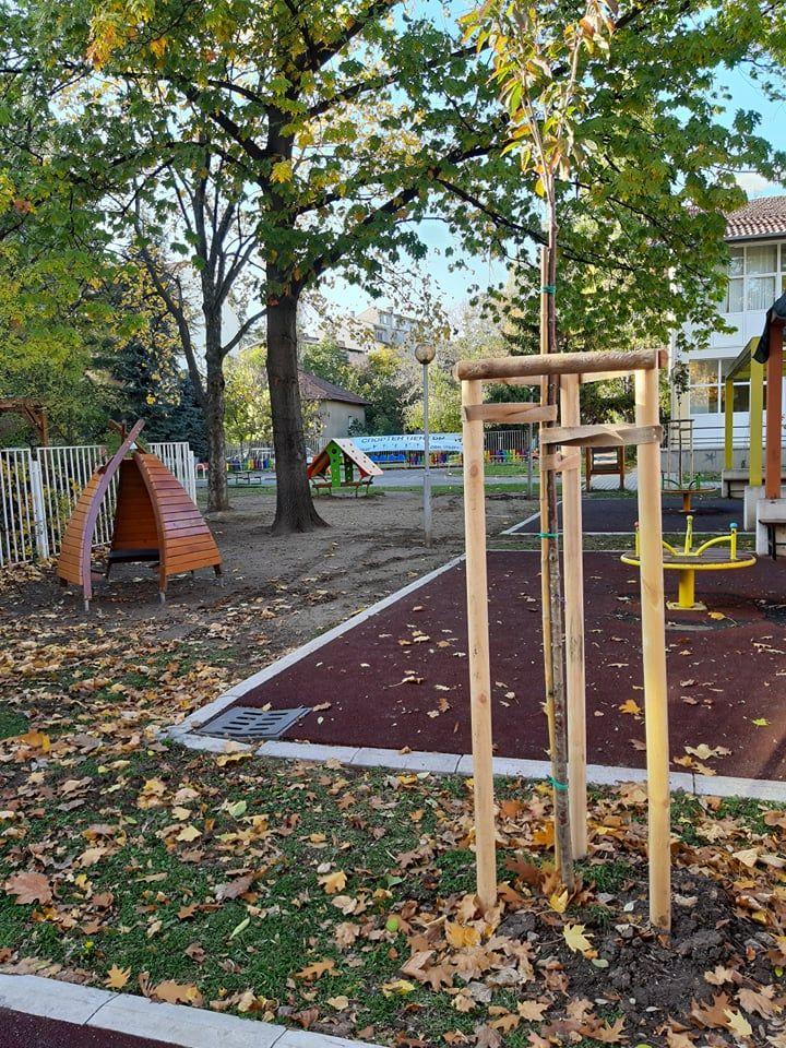 Японски вишни ще красят двора на детската градина - Изображение 1